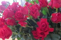 Hoa ngay le_15
