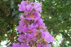 Hoa ngay le_27