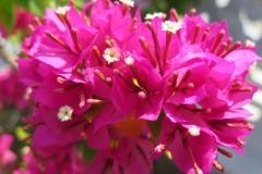 Hoa ngay le_29
