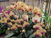 Hoa Dalat_10