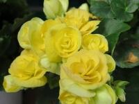 Hoa Dalat_12