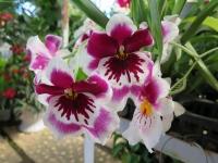 Hoa Dalat_13