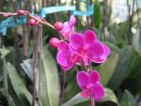 Hoa Dalat_18