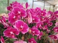 Hoa Dalat_20