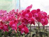 Hoa Dalat_21