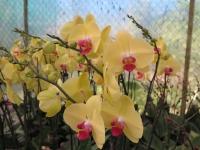 Hoa Dalat_22
