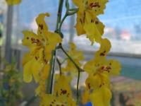 Hoa Dalat_28