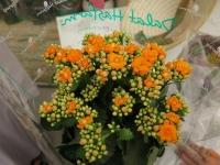 Hoa Dalat_29
