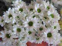 Hoa Dalat_33