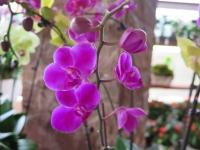 Hoa Dalat_34