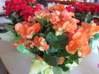 Hoa Dalat_36