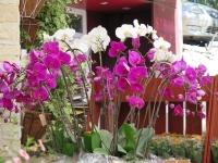 Hoa Dalat_40