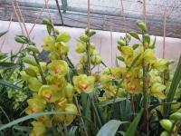 Hoa Dalat_46
