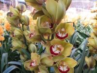 Hoa Dalat_52