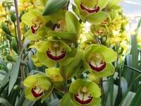 Hoa Dalat_54