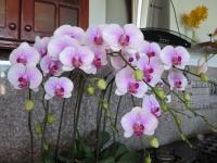 Hoa Dalat_55