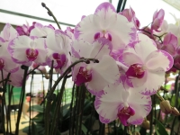 Hoa Dalat_69