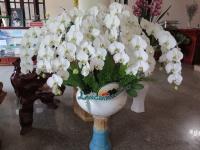 Hoa Dalat_74
