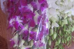 Hoa ngay tu tu_10