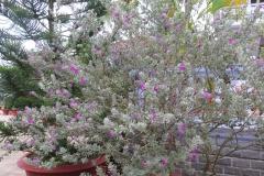 Hoa ngay tu tu_19